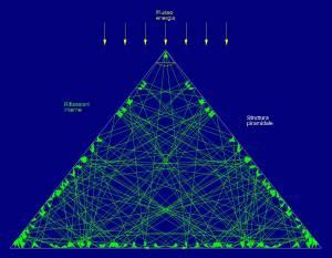 Ii punti focali si posizionano  a circa ¼ ed ad ½ dell'altezza