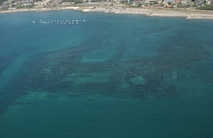 Fonte immagine: http://www.naturamediterraneo.com/forum/topic.asp?TOPIC_ID=24356